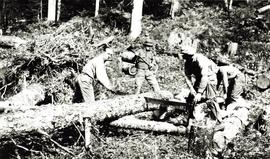 Survey crew bucking up a spruce log to make camp furniture