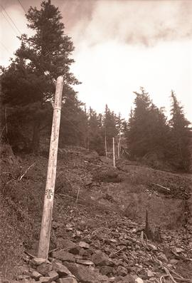 [Utility poles between Bella Coola and Anahim Lake]