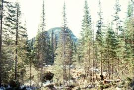 Summit Lake, March 1992