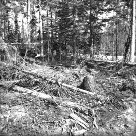 Scarification after clear cut logging at East Loop Road, Aleza Lake Forest Experiment Station