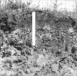 Soil development over lacustrine deposits at Giscome in 1922 fire area