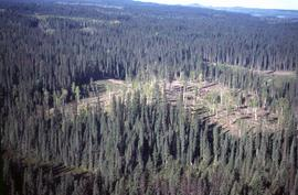 View of logged area in forest