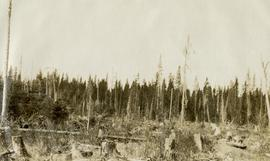 Unburned and Burned Cutting of 1918 at Hutton