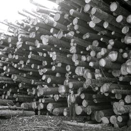 Typical Spruce-Balsam tree length logs from mature Spruce-Balsam types at T.F.L. 29, Giscome