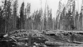 Stacked logs near sawmill