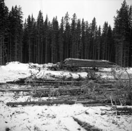 Pulpwood Logging Operations on P.T.S. X91960, Swamp Lake, Prince George Pulp and Paper Ltd. showi...