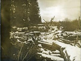 Bridge across log jam built by survey party