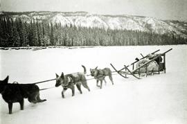 Dog sled team near Aleza Lake