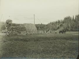 Stacking hay at Pioneer Ranch in the Bulkley Valley