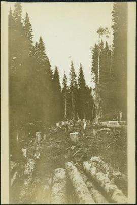 Clearing Forest for Grand Trunk Pacific Railway
