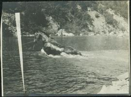 Towing Horse in Grand Canyon, Fraser River