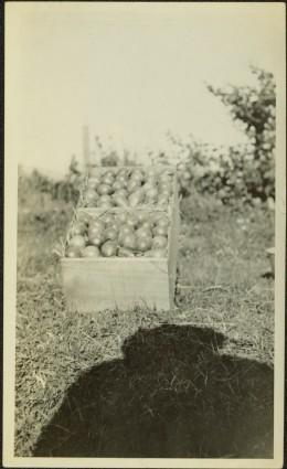 Box of Pears Belonging to Jean