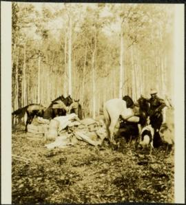 Man with Horses and Dog in Camp