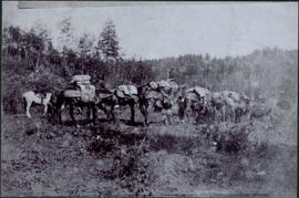 Pack Train Near Blackwater River, BC