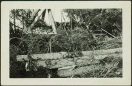 Felled Trees in Forest