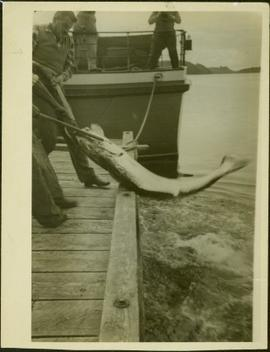 J.J. Claxton and an unidentified man peughing a large fish onto a dock