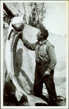 Man Holding Large Sturgeon at Thomas Creek, BC