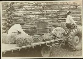 Iona Campagnolo sits on hay trailer being pulled by tractor in front of log barn