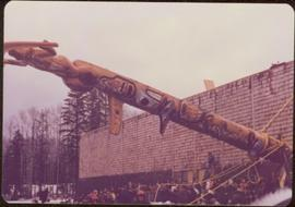 Crowd watches a great totem pole being raised in front of a public building, Aiyansh, BC