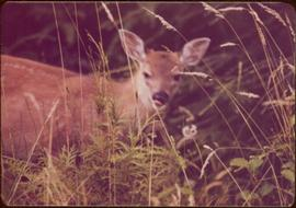 Close view of deer in grass