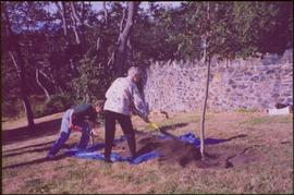 Iona Campagnolo and an unidentified woman shoveling dirt over the roots of a tree
