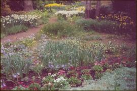 Yellow and white daffodils, purple daisies, blue bells, and chrysanthemums in Terrace Gardens