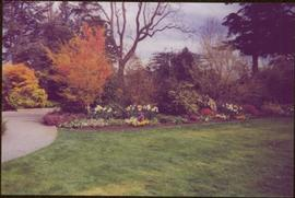 Trees and flower beds in front of lawn and path at Terrace Gardens, Government House, Victoria, BC