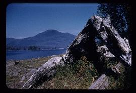 Driftwood on shore of the Skeena River