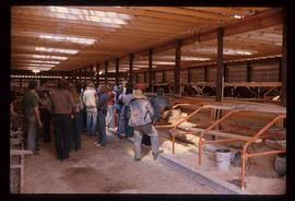 Dairy Farm - Barn Interior