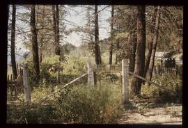 Soda Creek - Cemetery