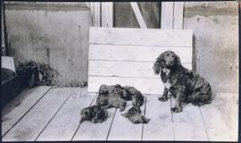 Spaniel dog and litter of puppies