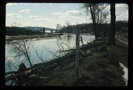 Nautley River - Beaver Damage