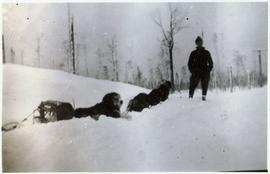 Dogsled team resting in the snow with musher standing nearby