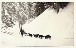 Dogsled team dragging loaded sled through the snow with musher alongside