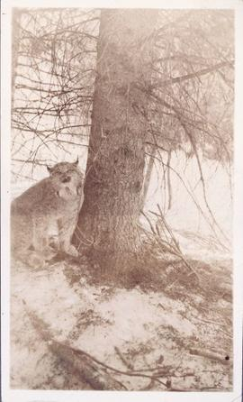 Lynx next to a tree