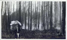 Pack horse standing in a smoky clearing