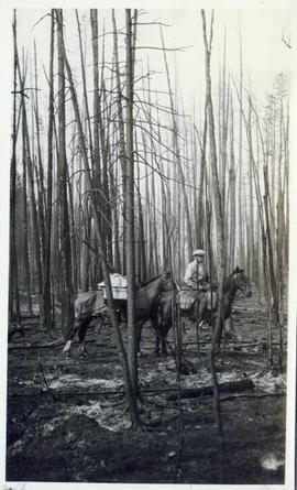 Man astride a horse with packhorse beside standing in a bare forest