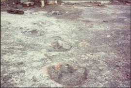 Dinosaur footprints on site of W.A.C. Bennett Dam