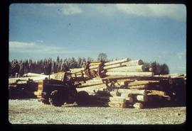 Upper Fraser Sawmill - General - Debarked logs in logyard