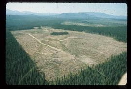 Woods Division - Patch Logging - Aerial view