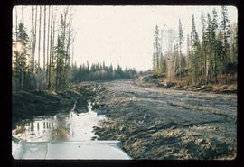 Woods Division - Roads - Unidentified dirt road and parallel ditch