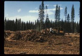 Reforestation - Willow Canyon Nursery - Clearing site