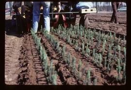 Reforestation - Willow Canyon Nursery - Transplanting seedlings by machine
