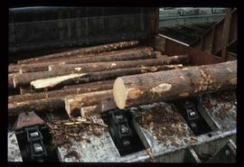 Houston Sawmill - General - Outfeed to merchandiser for logs continuing on for processing