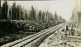 A log yard next to some railroad tracks
