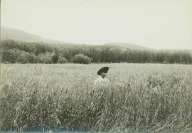 Unidentified man standing in shoulder high fields of barley in the Bulkley Valley, BC