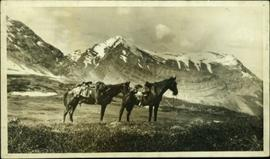 Two saddled horses from Knox McCusker's pack train