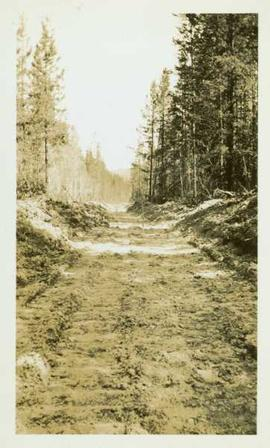 Dirt road through a forested landscape