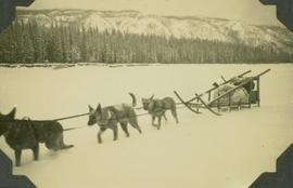 Dog sled team on the Peace River