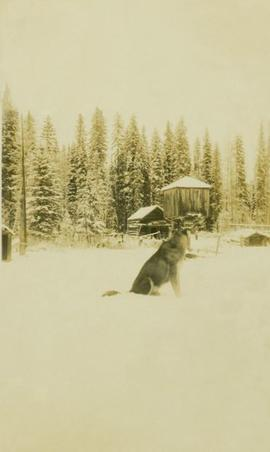 A dog and a wooden structure in a snowy wooded landscape